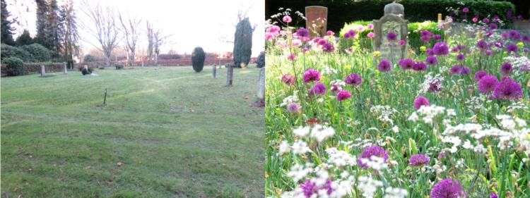Der Wildblumengarten Ohlsdorfer Friedhof - vorher (links) und nachher (rechts) - © Hamburger Friedhöfe (AöR) 2019